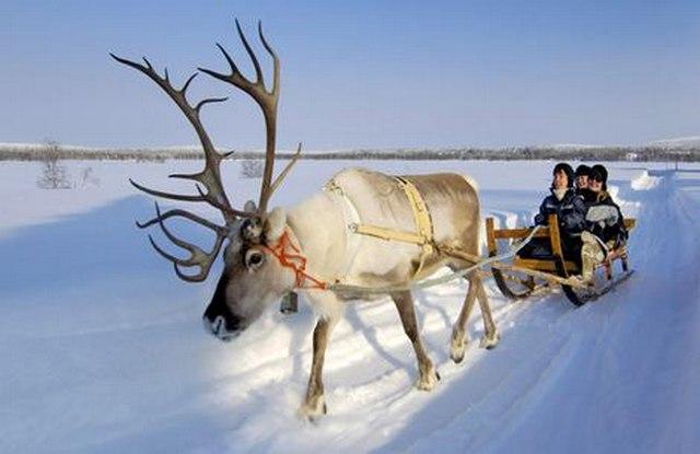 Lovely-Christmas-Reindeer10